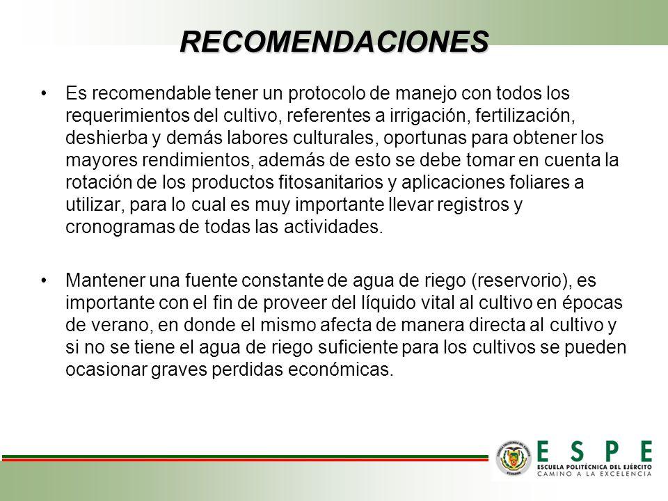 RECOMENDACIONES Es recomendable tener un protocolo de manejo con todos los requerimientos del cultivo, referentes a irrigación, fertilización, deshier