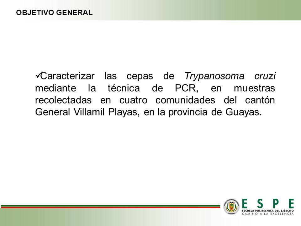 Caracterizar las cepas de Trypanosoma cruzi mediante la técnica de PCR, en muestras recolectadas en cuatro comunidades del cantón General Villamil Pla