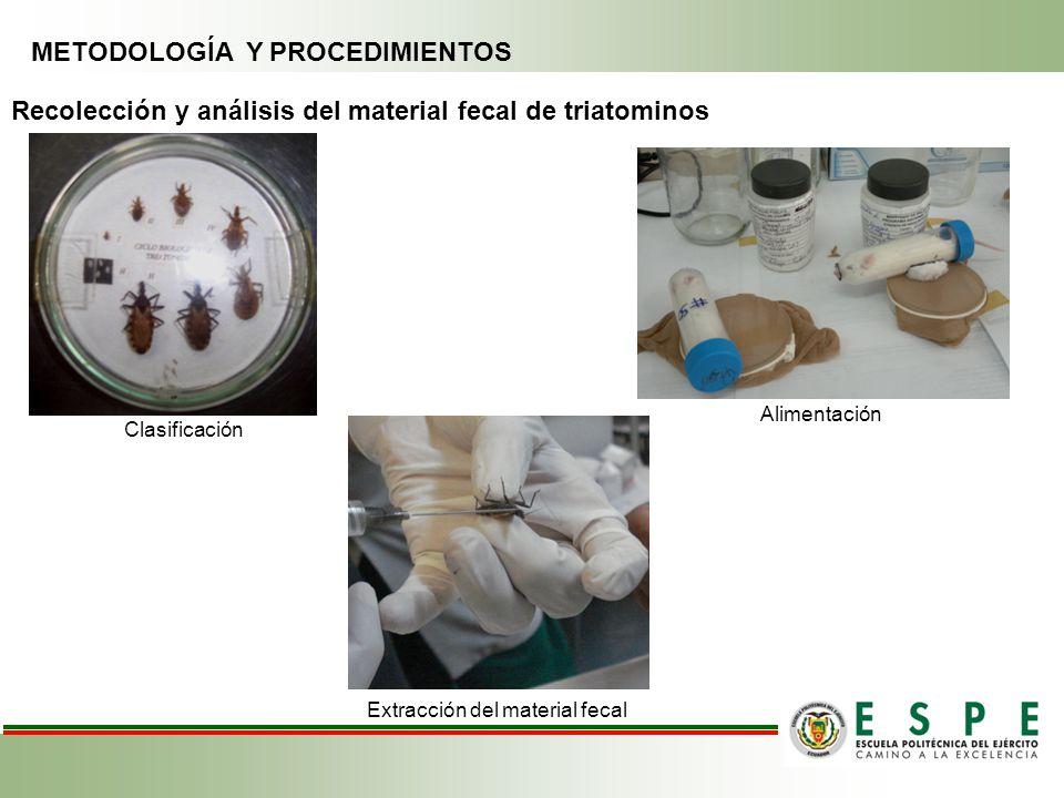 METODOLOGÍA Y PROCEDIMIENTOS Recolección y análisis del material fecal de triatominos Clasificación Alimentación Extracción del material fecal