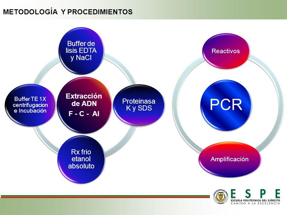 Extracción de ADN F - C - AI Buffer de lisis EDTA y NaCl Proteinasa K y SDS Rx frio etanol absoluto Buffer TE 1X centrifugacion e Incubación PCR React