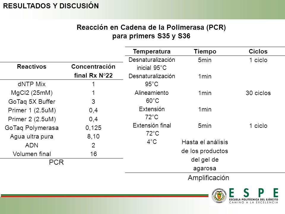 Reacción en Cadena de la Polimerasa (PCR) para primers S35 y S36 Reactivos Concentración final Rx N°22 dNTP Mix1 MgCl2 (25mM)1 GoTaq 5X Buffer3 Primer