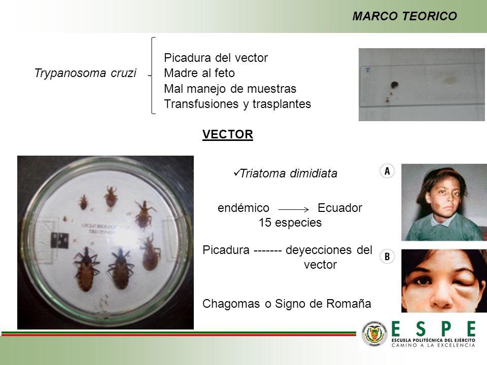 Trypanosoma cruzi Picadura del vector Madre al feto Mal manejo de muestras Transfusiones y trasplantes Picadura ------- deyecciones del vector Chagoma