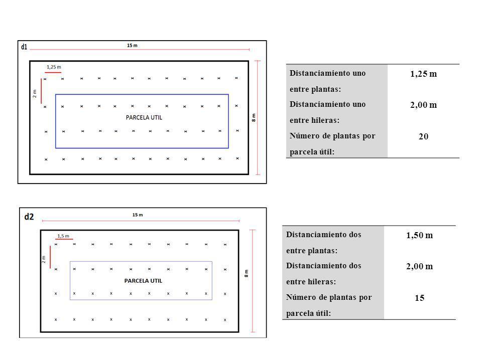 Distanciamiento dos entre plantas: 1,50 m Distanciamiento dos entre hileras: 2,00 m Número de plantas por parcela útil: 15 Distanciamiento uno entre p