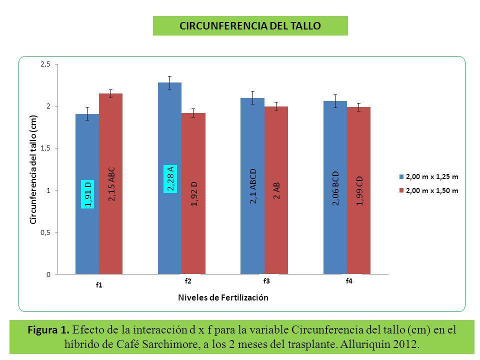 Figura 1. Efecto de la interacción d x f para la variable Circunferencia del tallo (cm) en el híbrido de Café Sarchimore, a los 2 meses del trasplante