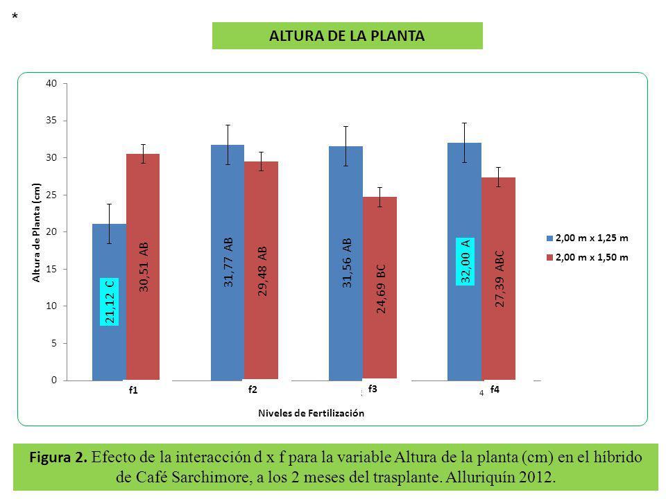 Figura 2. Efecto de la interacción d x f para la variable Altura de la planta (cm) en el híbrido de Café Sarchimore, a los 2 meses del trasplante. All