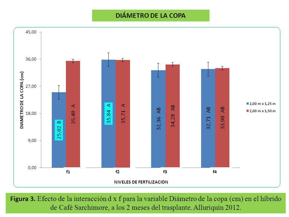 Figura 3. Efecto de la interacción d x f para la variable Diámetro de la copa (cm) en el híbrido de Café Sarchimore, a los 2 meses del trasplante. All