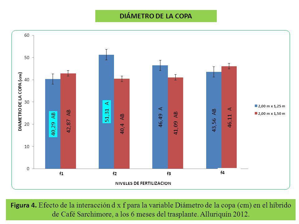 Figura 4. Efecto de la interacción d x f para la variable Diámetro de la copa (cm) en el híbrido de Café Sarchimore, a los 6 meses del trasplante. All