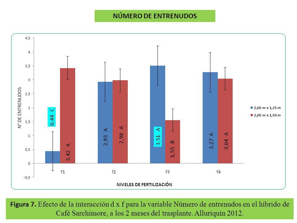 Figura 7. Efecto de la interacción d x f para la variable Número de entrenudos en el híbrido de Café Sarchimore, a los 2 meses del trasplante. Alluriq