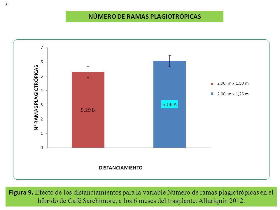 Figura 9. Efecto de los distanciamientos para la variable Número de ramas plagiotrópicas en el híbrido de Café Sarchimore, a los 6 meses del trasplant