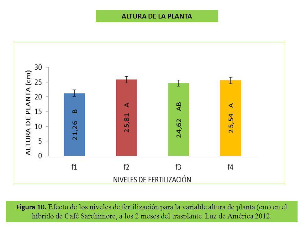 Figura 10. Efecto de los niveles de fertilización para la variable altura de planta (cm) en el híbrido de Café Sarchimore, a los 2 meses del trasplant