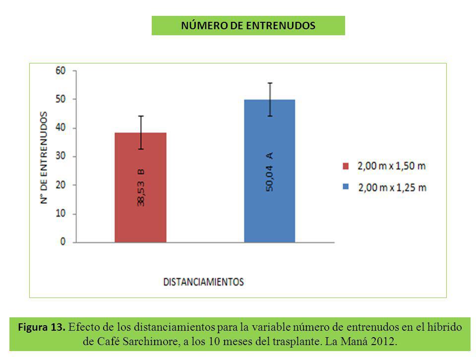 Figura 13. Efecto de los distanciamientos para la variable número de entrenudos en el híbrido de Café Sarchimore, a los 10 meses del trasplante. La Ma