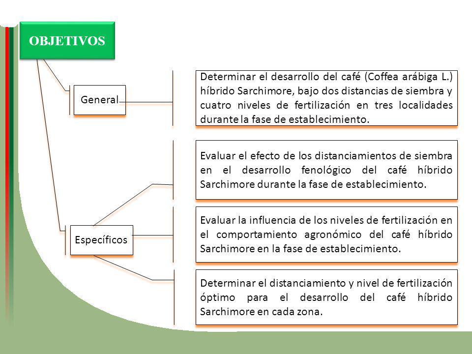 General Específicos Determinar el desarrollo del café (Coffea arábiga L.) híbrido Sarchimore, bajo dos distancias de siembra y cuatro niveles de ferti