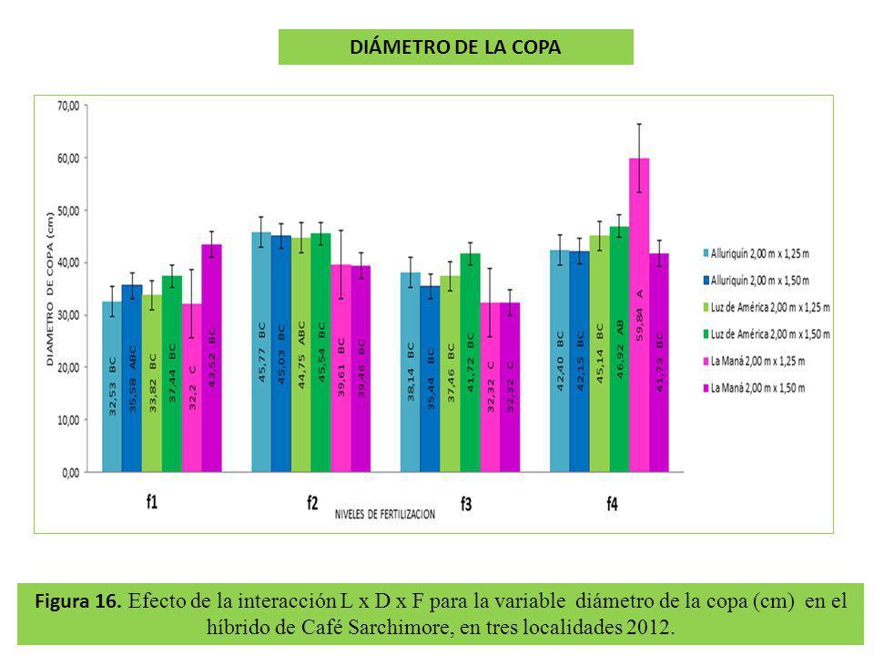 Figura 16. Efecto de la interacción L x D x F para la variable diámetro de la copa (cm) en el híbrido de Café Sarchimore, en tres localidades 2012. DI