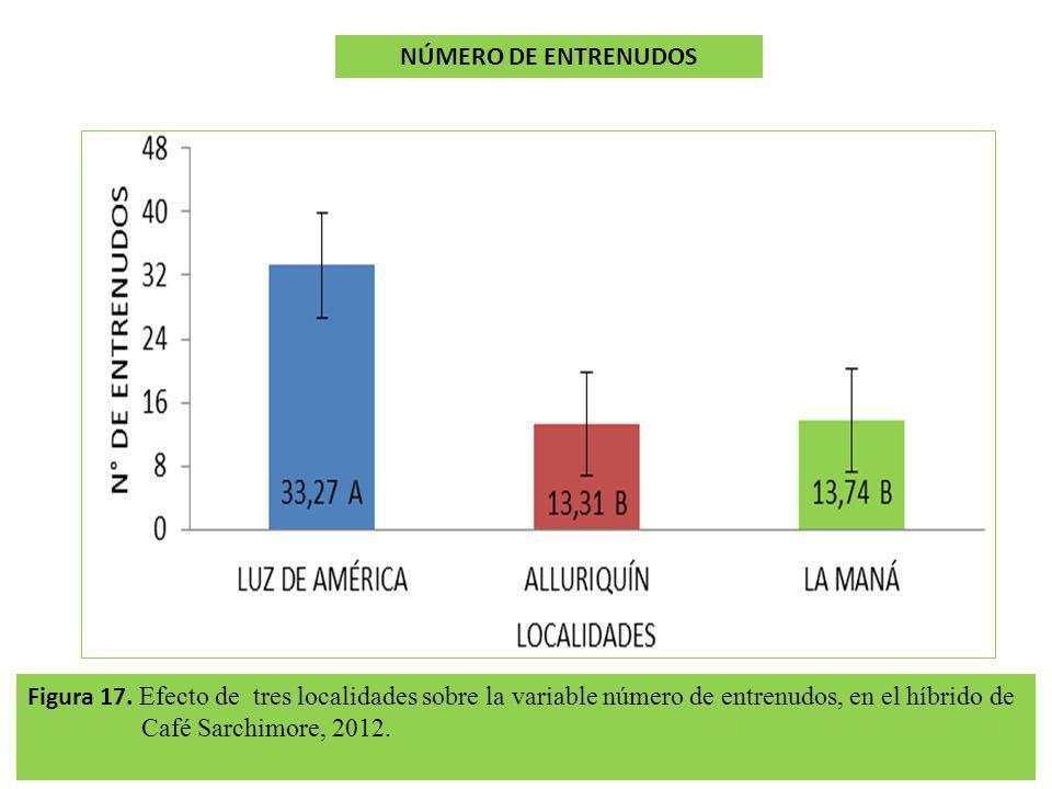 Figura 17. Efecto de tres localidades sobre la variable número de entrenudos, en el híbrido de Café Sarchimore, 2012. NÚMERO DE ENTRENUDOS