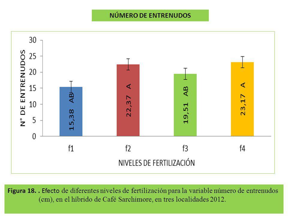 Figura 18.. Efecto de diferentes niveles de fertilización para la variable número de entrenudos (cm), en el híbrido de Café Sarchimore, en tres locali