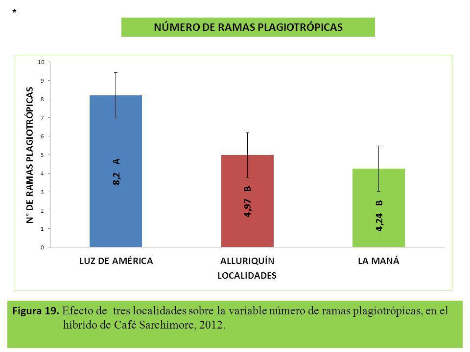 Figura 19. Efecto de tres localidades sobre la variable número de ramas plagiotrópicas, en el híbrido de Café Sarchimore, 2012. NÚMERO DE RAMAS PLAGIO