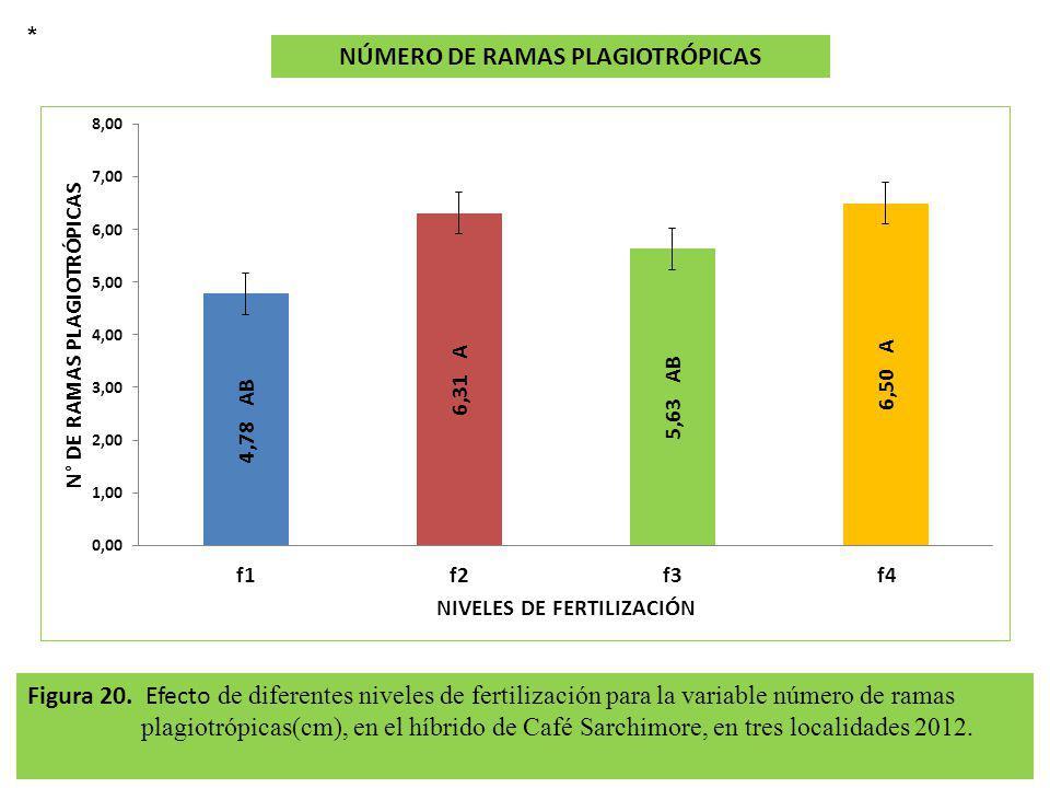 Figura 20. Efecto de diferentes niveles de fertilización para la variable número de ramas plagiotrópicas(cm), en el híbrido de Café Sarchimore, en tre