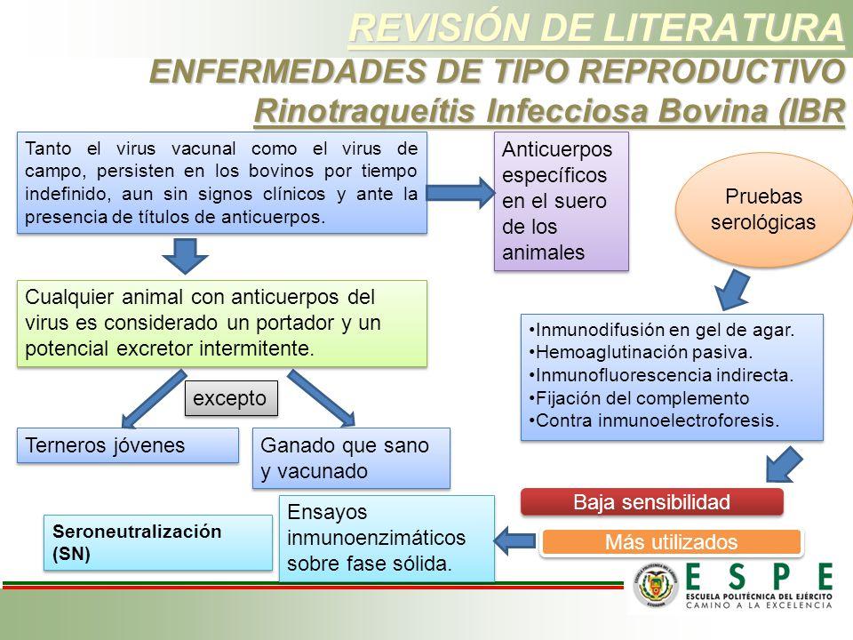REVISIÓN DE LITERATURA ENFERMEDADES DE TIPO REPRODUCTIVO Rinotraqueítis Infecciosa Bovina (IBR Tanto el virus vacunal como el virus de campo, persiste