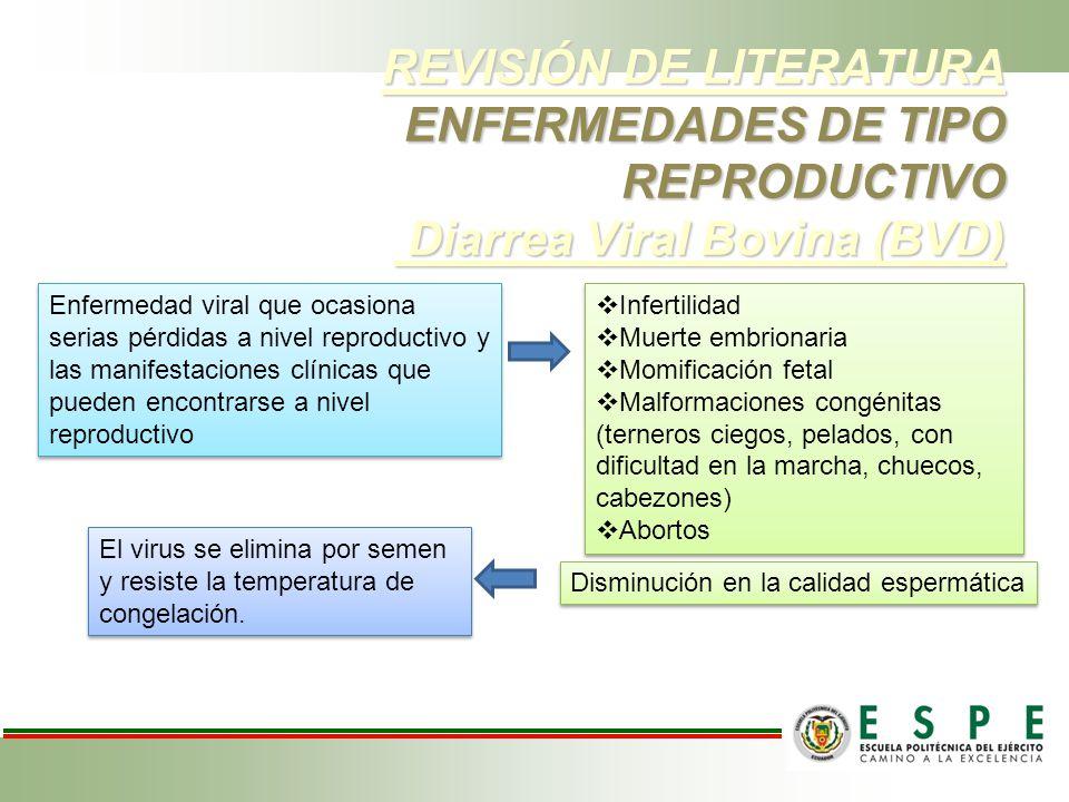 REVISIÓN DE LITERATURA ENFERMEDADES DE TIPO REPRODUCTIVO Diarrea Viral Bovina (BVD) REVISIÓN DE LITERATURA ENFERMEDADES DE TIPO REPRODUCTIVO Diarrea V