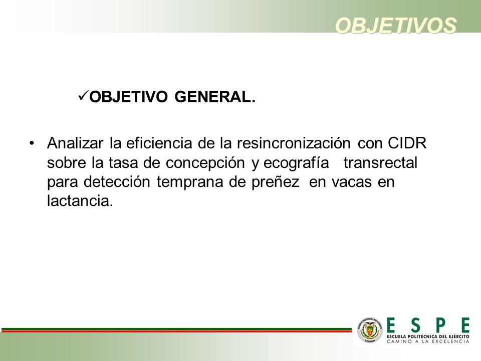 OBJETIVOS OBJETIVO GENERAL. Analizar la eficiencia de la resincronización con CIDR sobre la tasa de concepción y ecografía transrectal para detección