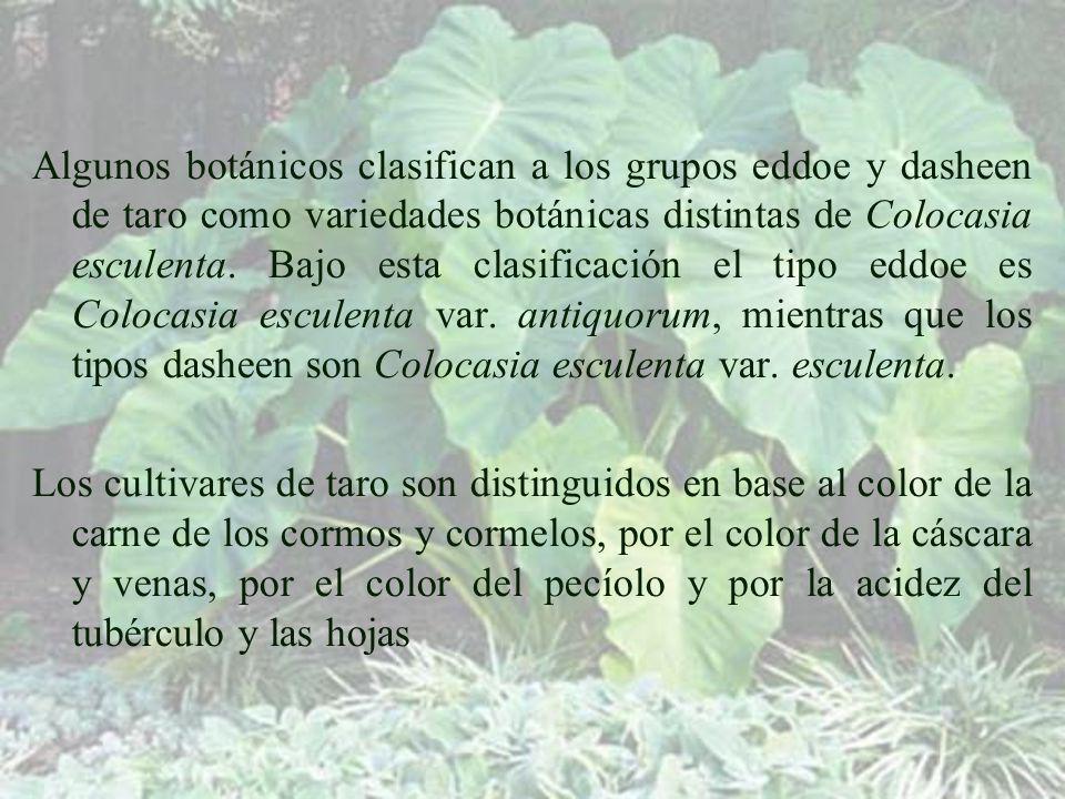 Algunos botánicos clasifican a los grupos eddoe y dasheen de taro como variedades botánicas distintas de Colocasia esculenta.