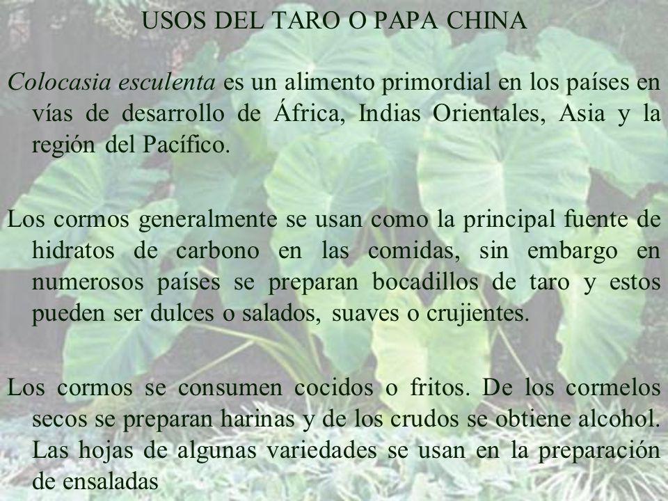 USOS DEL TARO O PAPA CHINA Colocasia esculenta es un alimento primordial en los países en vías de desarrollo de África, Indias Orientales, Asia y la región del Pacífico.