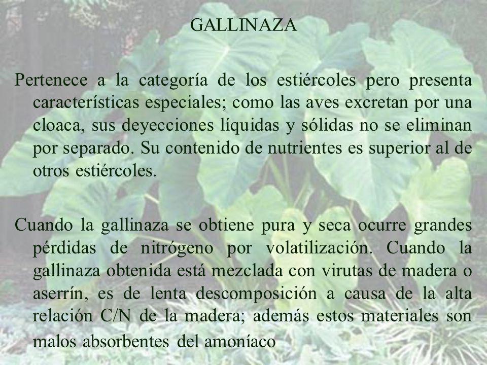 GALLINAZA Pertenece a la categoría de los estiércoles pero presenta características especiales; como las aves excretan por una cloaca, sus deyecciones líquidas y sólidas no se eliminan por separado.