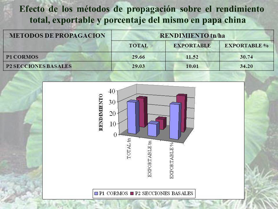 METODOS DE PROPAGACIONRENDIMIENTO tn/ha TOTALEXPORTABLEEXPORTABLE % P1 CORMOS29.6611.5230.74 P2 SECCIONES BASALES29.0310.0134.20 Efecto de los métodos de propagación sobre el rendimiento total, exportable y porcentaje del mismo en papa china