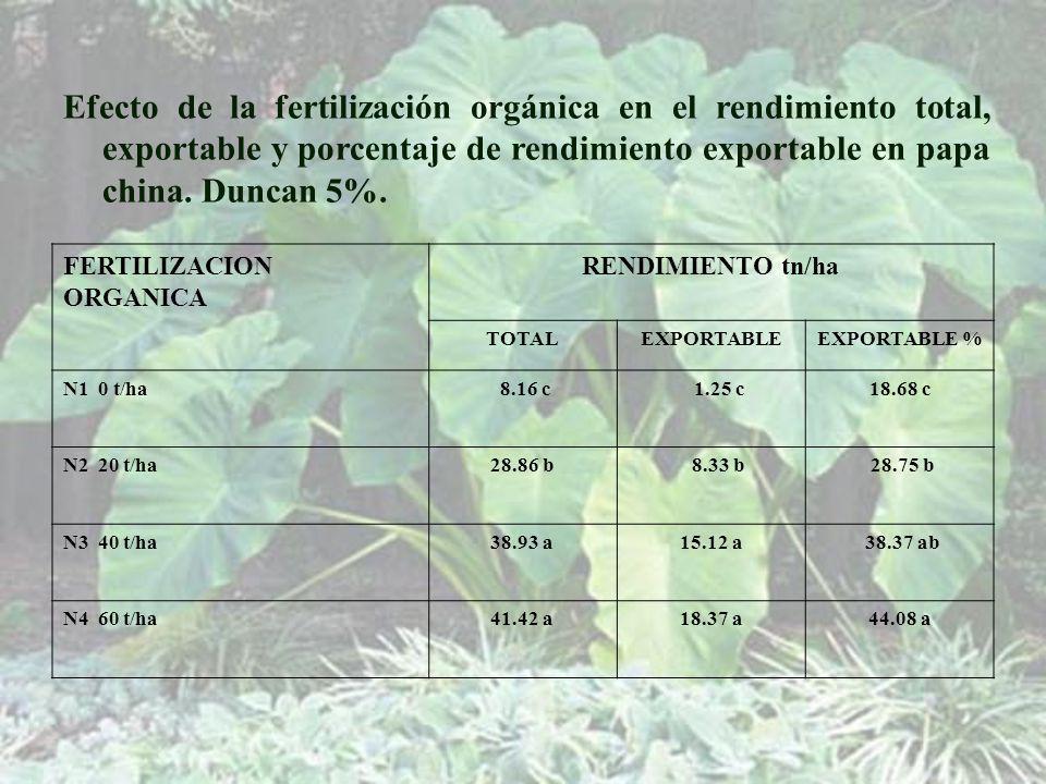 FERTILIZACION ORGANICA RENDIMIENTO tn/ha TOTALEXPORTABLEEXPORTABLE % N1 0 t/ha 8.16 c 1.25 c18.68 c N2 20 t/ha28.86 b 8.33 b 28.75 b N3 40 t/ha38.93 a15.12 a 38.37 ab N4 60 t/ha41.42 a18.37 a44.08 a Efecto de la fertilización orgánica en el rendimiento total, exportable y porcentaje de rendimiento exportable en papa china.