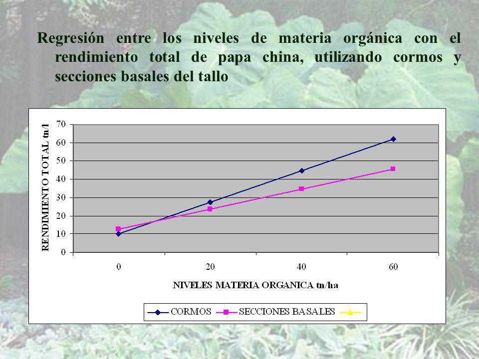 Regresión entre los niveles de materia orgánica con el rendimiento total de papa china, utilizando cormos y secciones basales del tallo