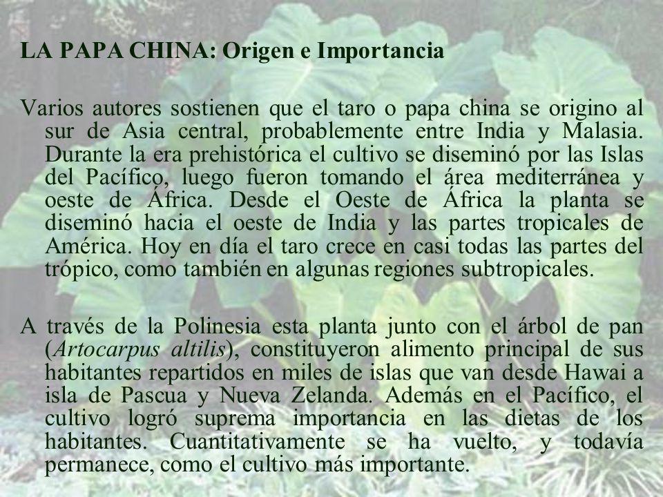 LA PAPA CHINA: Origen e Importancia Varios autores sostienen que el taro o papa china se origino al sur de Asia central, probablemente entre India y Malasia.