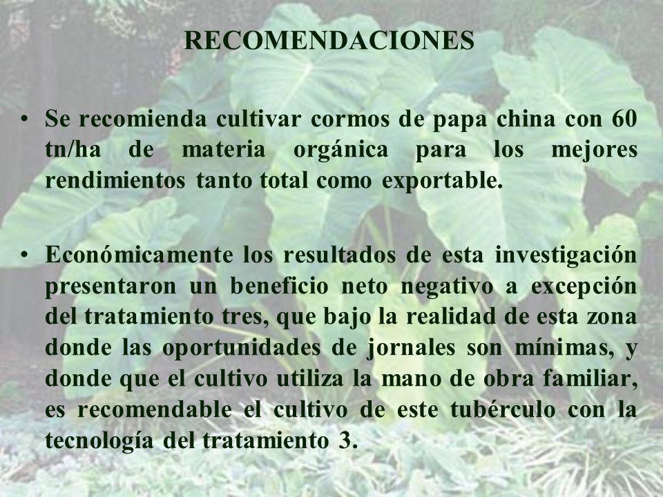 RECOMENDACIONES Se recomienda cultivar cormos de papa china con 60 tn/ha de materia orgánica para los mejores rendimientos tanto total como exportable.