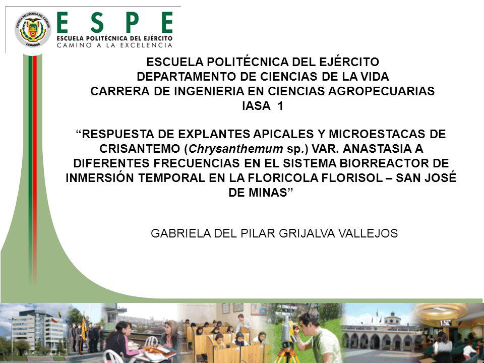 ESCUELA POLITÉCNICA DEL EJÉRCITO DEPARTAMENTO DE CIENCIAS DE LA VIDA CARRERA DE INGENIERIA EN CIENCIAS AGROPECUARIAS IASA 1 RESPUESTA DE EXPLANTES APICALES Y MICROESTACAS DE CRISANTEMO (Chrysanthemum sp.) VAR.