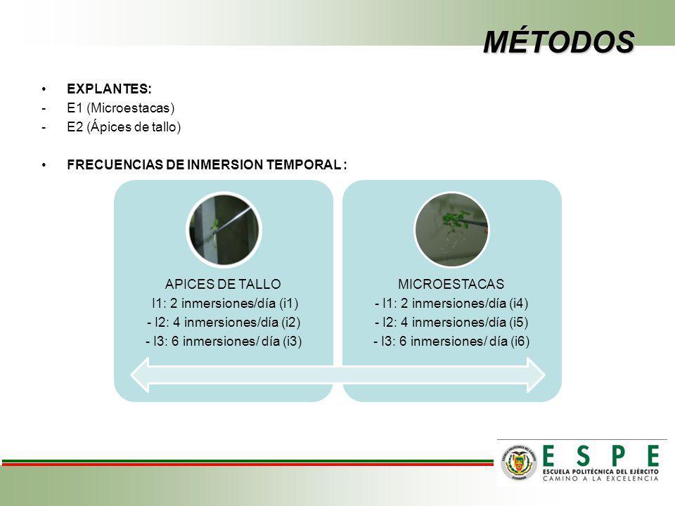 MÉTODOS EXPLANTES: -E1 (Microestacas) -E2 (Ápices de tallo) FRECUENCIAS DE INMERSION TEMPORAL : APICES DE TALLO I1: 2 inmersiones/día (i1) - I2: 4 inmersiones/día (i2) - I3: 6 inmersiones/ día (i3) MICROESTACAS - I1: 2 inmersiones/día (i4) - I2: 4 inmersiones/día (i5) - I3: 6 inmersiones/ día (i6)