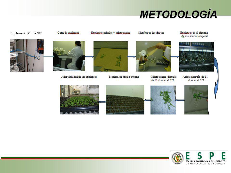 METODOLOGÍA Implementación del SIT