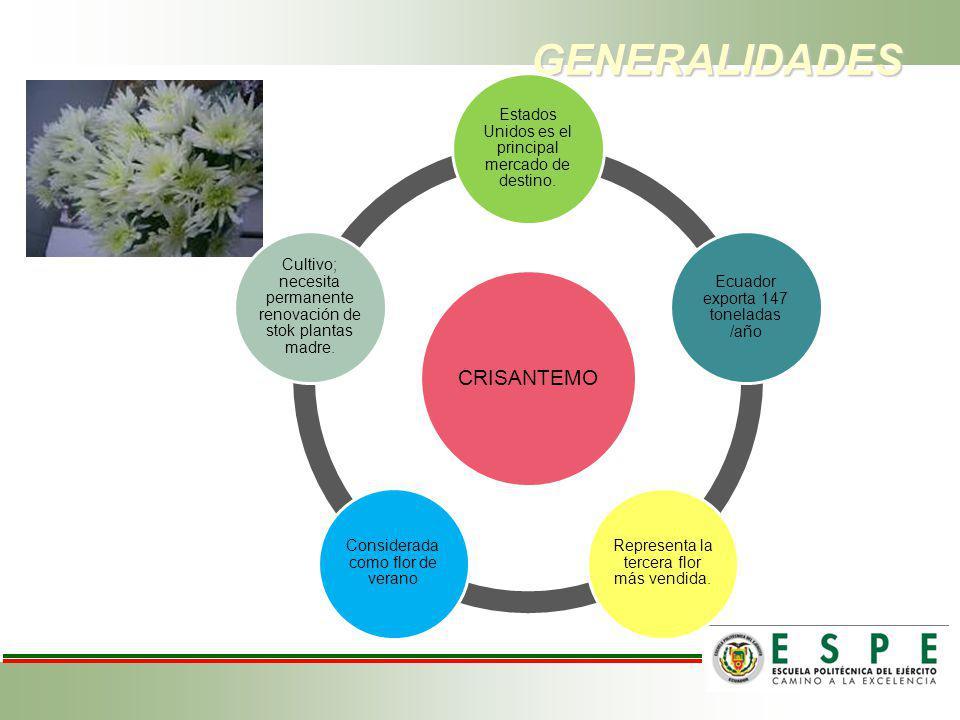 CONCLUSIONES La mejor respuesta obtenida en el sistema de inmersión temporal VioVeLuz en la florícola FLORISOL – San José de Minas fue de 4 inmersiones/día en explantes apicales.