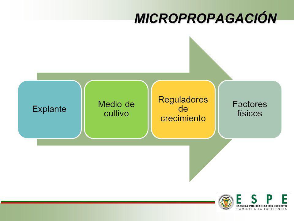 MICROPROPAGACIÓN CRISANTEMO NECESIDADES Múltiple infecciones por virus y viroides Disponibilidad de cantidades suficientes De rescatar y regenerar variedades