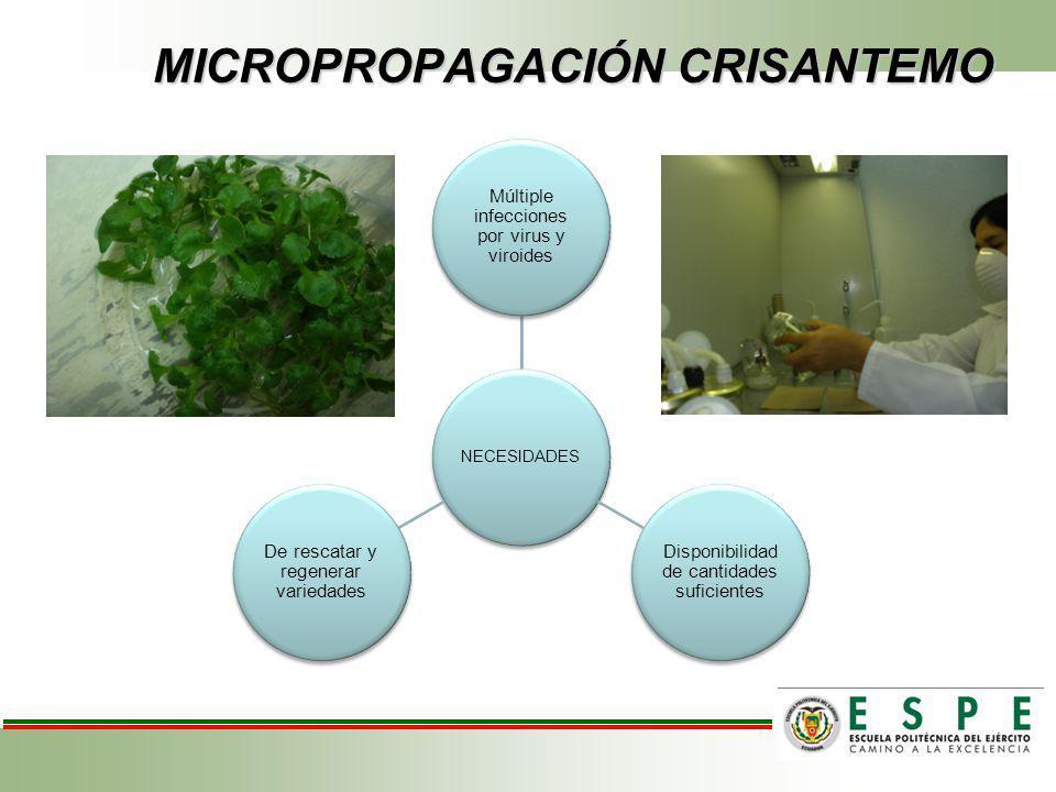 RECOMENDACIONES Implementar el Sistema de Inmersión Temporal en el área de laboratorio de la florícola FLORISOL - San José de Minas.