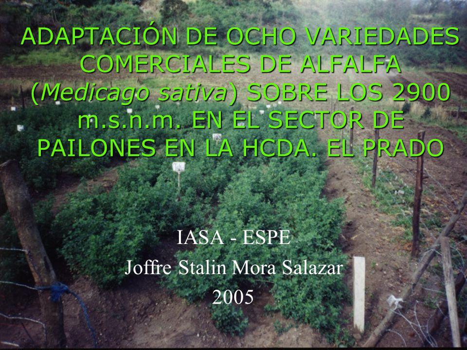 ADAPTACIÓN DE OCHO VARIEDADES COMERCIALES DE ALFALFA (Medicago sativa) SOBRE LOS 2900 m.s.n.m.