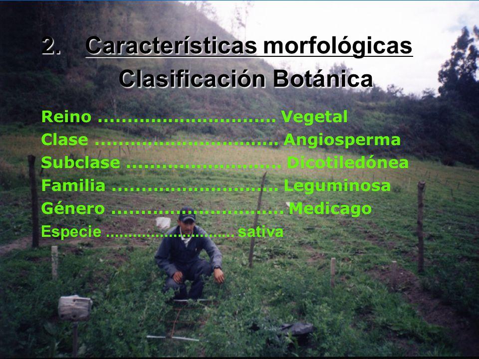 León (2002), nos dice que la alfalfa es una leguminosa muy apetecida por el ganado vacuno, caballar, ovino y especies menores como cuyes y conejos, se
