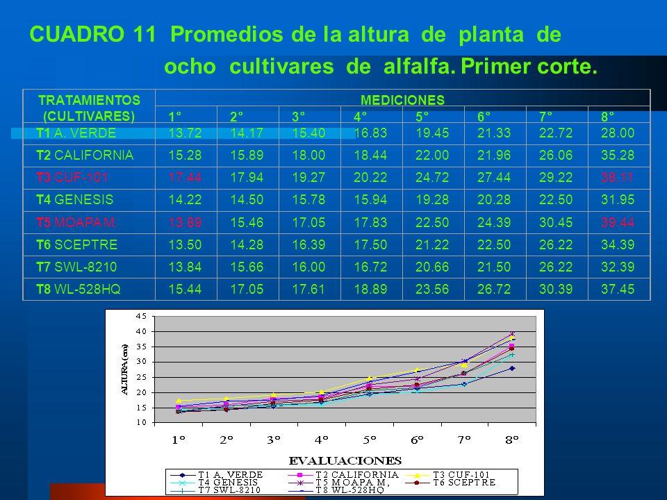 B. ALTURA DE PLANTA 1. Primer corte Si bien no se diferenciaron estadísticamente los cultivares de alfalfa en estudio, las mayores alturas correspondi