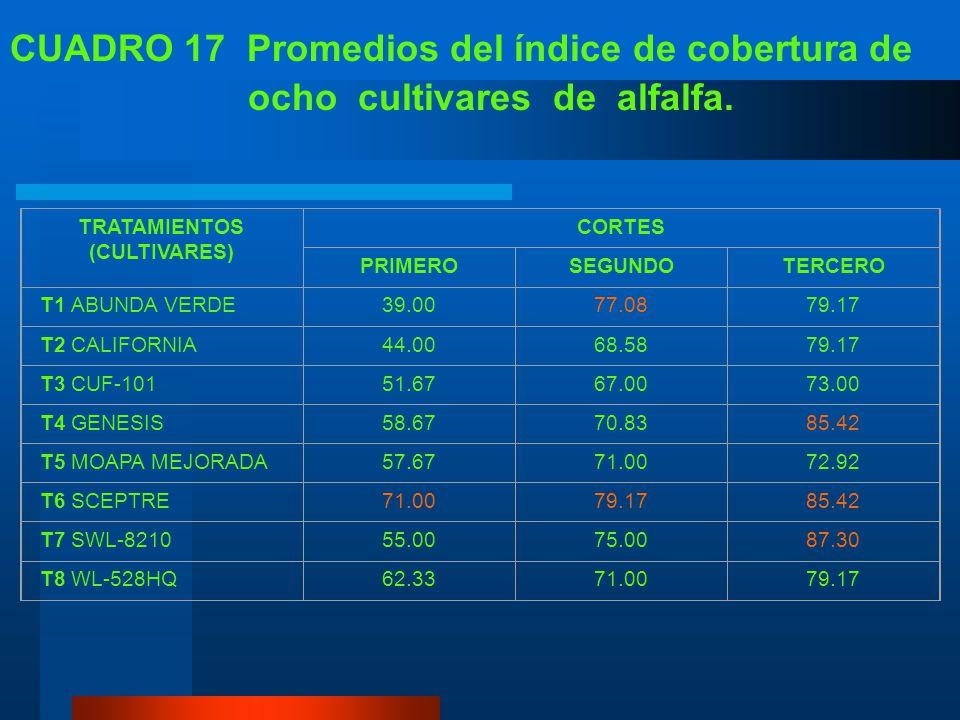 C. ÍNDICE DE COBERTURA El cultivar Sceptre en el primer corte presento el mayor índice de cobertura alcanzando un 71.00%, mientras que el resto no log