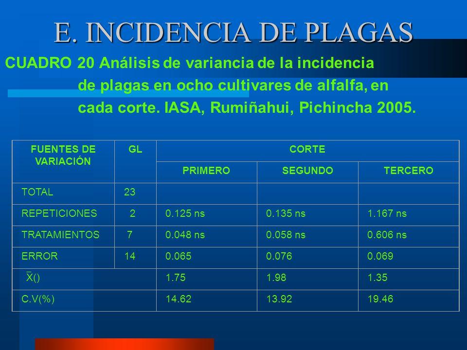 D. INCIDENCIA DE PECA Al establecer los análisis de variancia para la incidencia de peca evaluada en escala únicamente se detectó diferencias estadíst