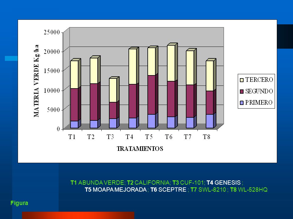 CUADRO 23 Promedios del rendimiento de materia verde en kg/ha de las tres repeticiones de los ocho cultivares de alfalfa. TRATAMIENTOS (CULTIVARES) CO