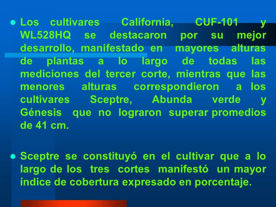 En el segundo corte los cultivares California, CUF-101, Moapa Mejorada, y WL528HQ fueron los cultivares que mas rápidamente sobrepasaron los 50cm de a