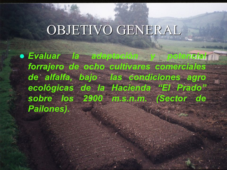 OBJETIVO GENERAL Evaluar la adaptación y potencial forrajero de ocho cultivares comerciales de alfalfa, bajo las condiciones agro ecológicas de la Hacienda El Prado sobre los 2900 m.s.n.m.