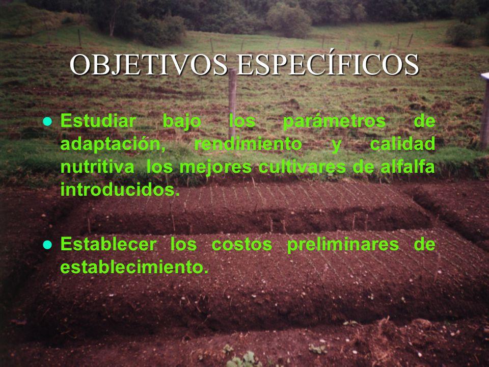OBJETIVOS ESPECÍFICOS Estudiar bajo los parámetros de adaptación, rendimiento y calidad nutritiva los mejores cultivares de alfalfa introducidos.