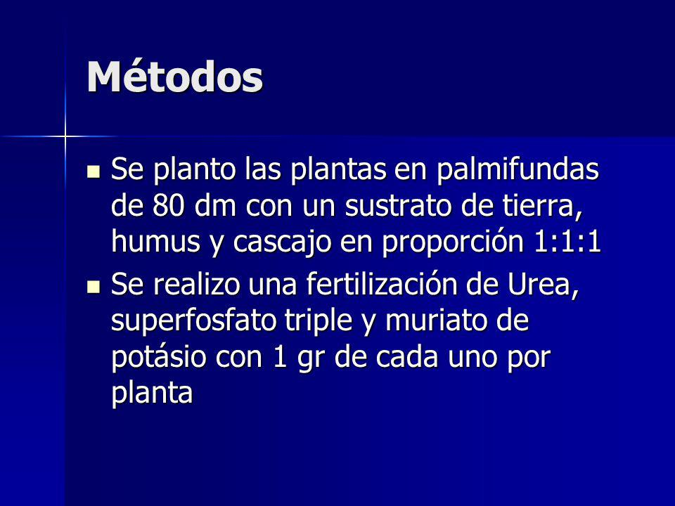 Métodos Se planto las plantas en palmifundas de 80 dm con un sustrato de tierra, humus y cascajo en proporción 1:1:1 Se planto las plantas en palmifundas de 80 dm con un sustrato de tierra, humus y cascajo en proporción 1:1:1 Se realizo una fertilización de Urea, superfosfato triple y muriato de potásio con 1 gr de cada uno por planta Se realizo una fertilización de Urea, superfosfato triple y muriato de potásio con 1 gr de cada uno por planta