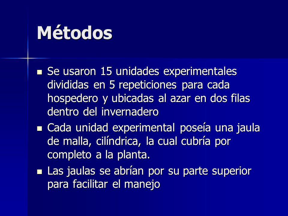 Métodos Se usaron 15 unidades experimentales divididas en 5 repeticiones para cada hospedero y ubicadas al azar en dos filas dentro del invernadero Se