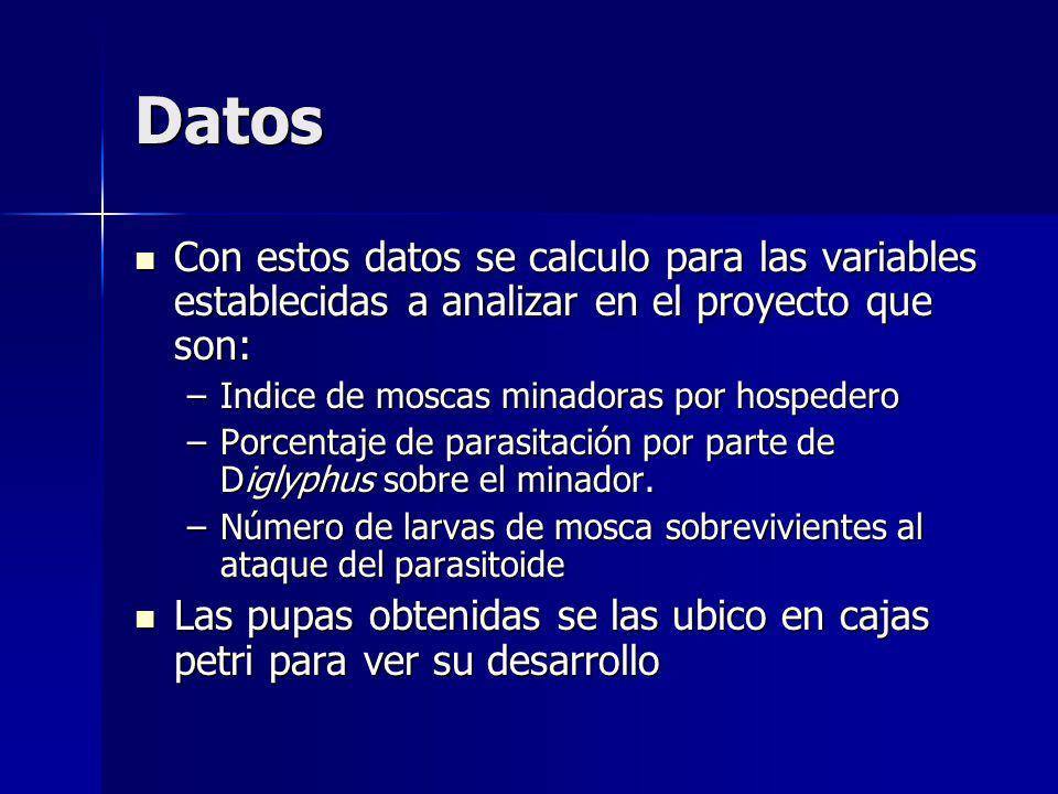 Datos Con estos datos se calculo para las variables establecidas a analizar en el proyecto que son: Con estos datos se calculo para las variables establecidas a analizar en el proyecto que son: –Indice de moscas minadoras por hospedero –Porcentaje de parasitación por parte de Diglyphus sobre el minador.